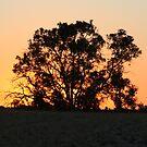 Sunset Of Fire by Sprinkla