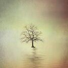 Solitude by DavidWHughes