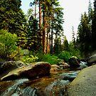 Upstream in Sequoia by HeavenOnEarth