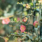 Spring is coming! by MariaVikerkaar