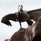 Pelican Launch by Steve Bulford