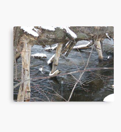 Dead Pine Canvas Print