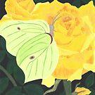 Brimstone Butterfly on Yellow Rose by EllieLieberman