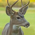 Portrait of a Young Buck by Mick Burkey