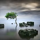 Zen Tree by Ben Ryan