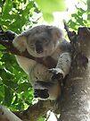 Sleeping Koala by Leanne Allen