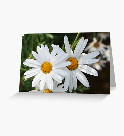 Daisy Chains Greeting Card