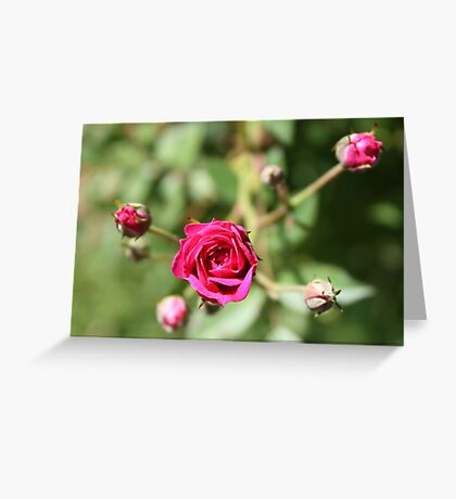 A Touch Of Romance Greeting Card