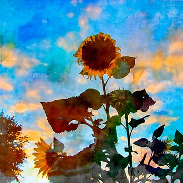 Sunflower Watercolor by alabca