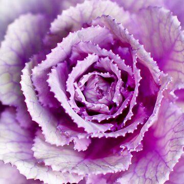 Purple Flower by redstar5