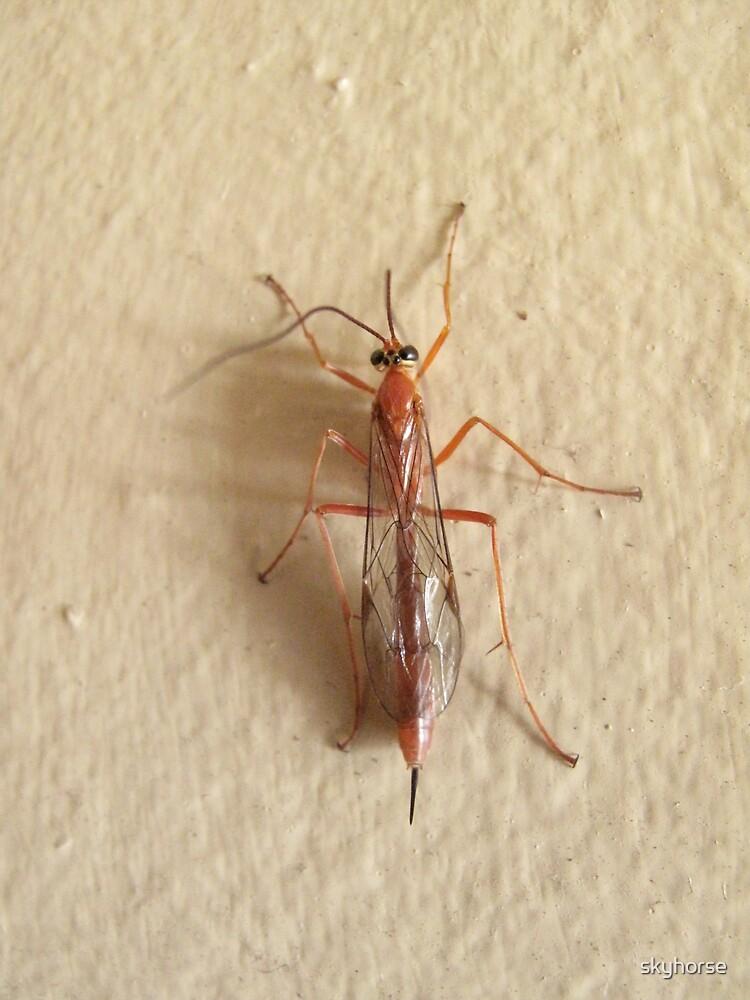 Orange Caterpillar Parasite Wasp - Netelia producta by skyhorse