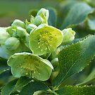 Green by MariaVikerkaar