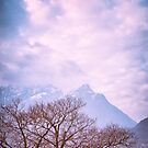 Tree and the Alps by Silvia Ganora