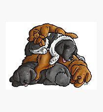 Newfoundland - sleeping pile cartoon Photographic Print