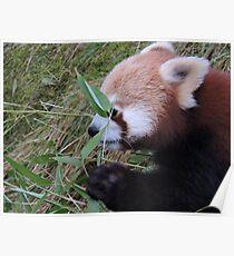 Little Bamboo, Little Panda Poster