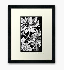 sunflower etching Framed Print