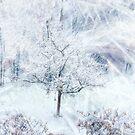 Winter Hues by Diane  Marie Kramer