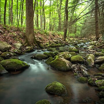 Misty Woodland River by ezumeimages