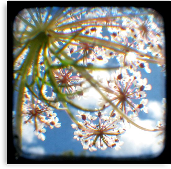Look Up Through The Viewfinder by Kitsmumma