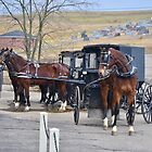 Buggy Parking in Amish Country, Ohio. by Billlee
