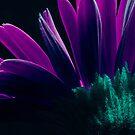 KrAzY by Kasey Cline