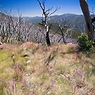 High Country Wild Flowers by Richard  Windeyer