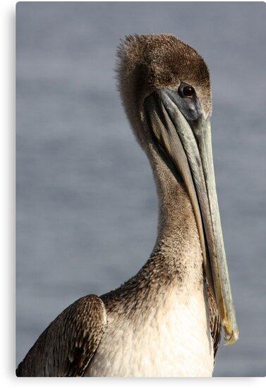 Proud Pelican by AuntDot