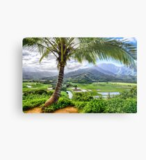 Tropical Palm Tree in Kauai, Hawaii  Metal Print