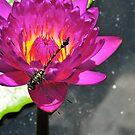 king dragonfly by nikonian