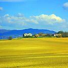 Golden View by jerry  alcantara