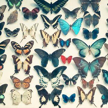 Wings by Cassia
