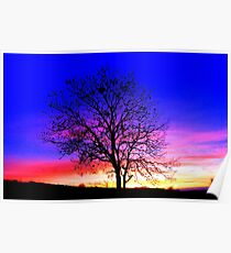 Complementary Colours in Nature Poster