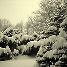 Winter I by Laura60