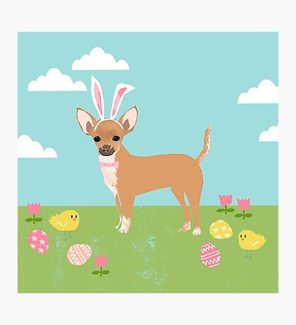 Chihuahua dog breed easter bunny costume pet portrait chihuahuas  Photographic Print