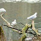 The Birds by karenlynda