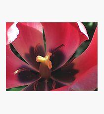 Eye of the Tulip Photographic Print