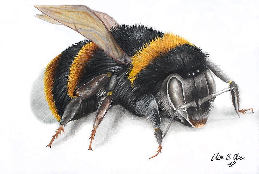 Bumble bee ink drawing by ElisesArtShop