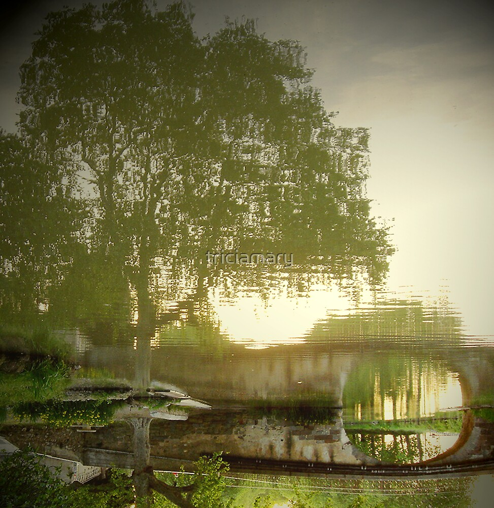 Reflected tree...with a twist by triciamary