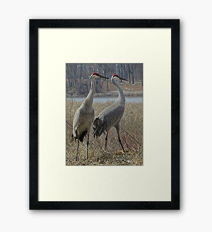 Cherokee Marsh Sandhill Cranes  Framed Print