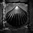 shot on iphone .. bronze shell by badduck09