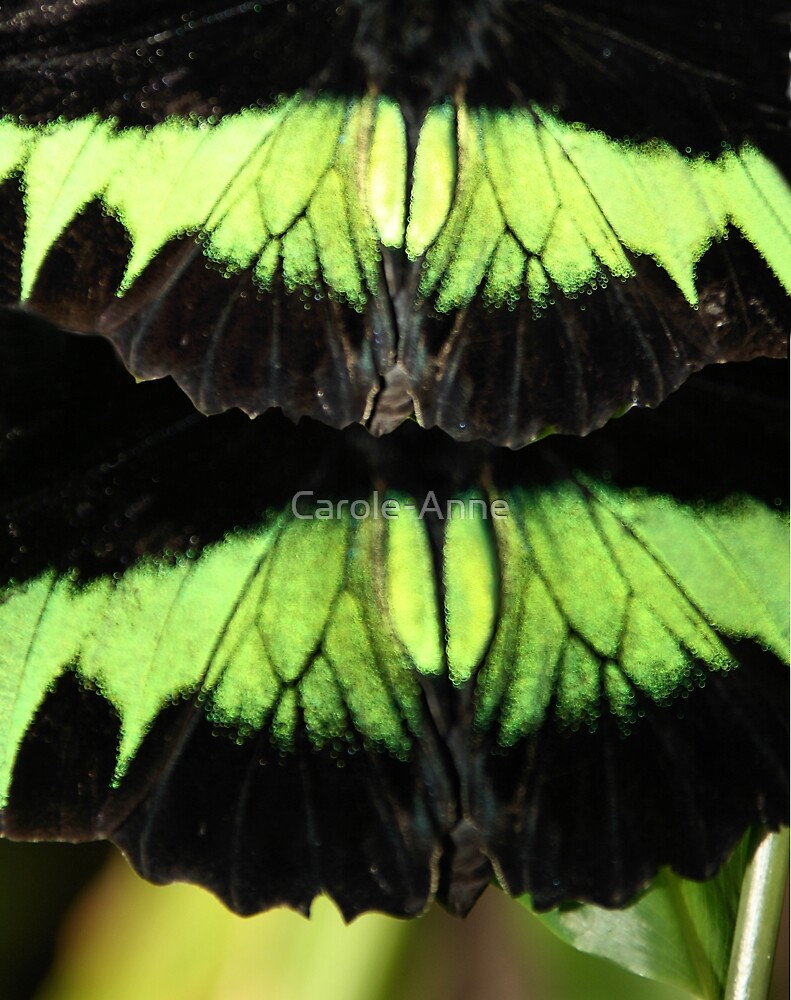 Abstract Butterfly by Carole-Anne