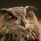 Eagle Owl by Franco De Luca Calce