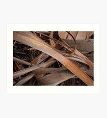 Eucalyptus Unclothed 1 Art Print