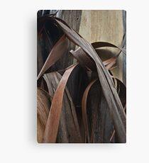 Eucalyptus Unclothed 2 Canvas Print