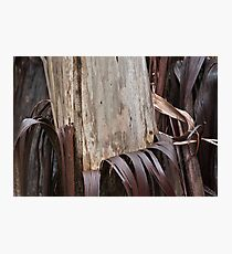 Eucalyptus Unclothed 3 Photographic Print