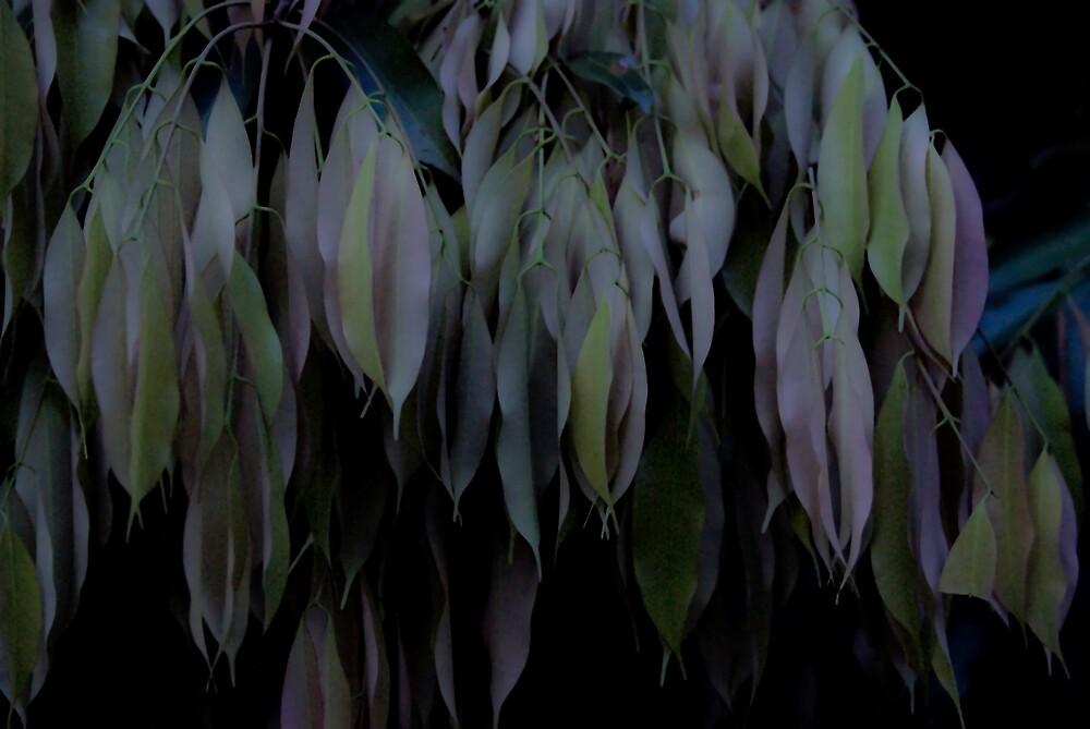 Night leaves by richardseah