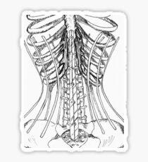 Corset Bones Sticker
