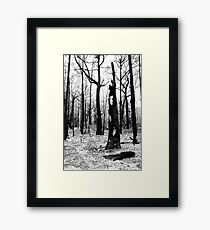 Burnt Tree - Bunyip State Forest Framed Print
