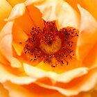 Rose The Inner Eye by Joy Watson