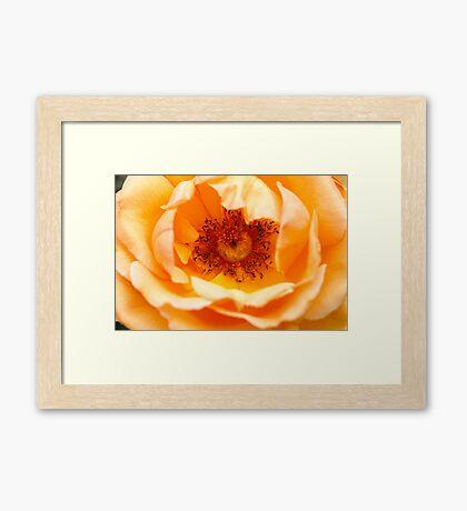 Rose The Inner Eye Framed Print